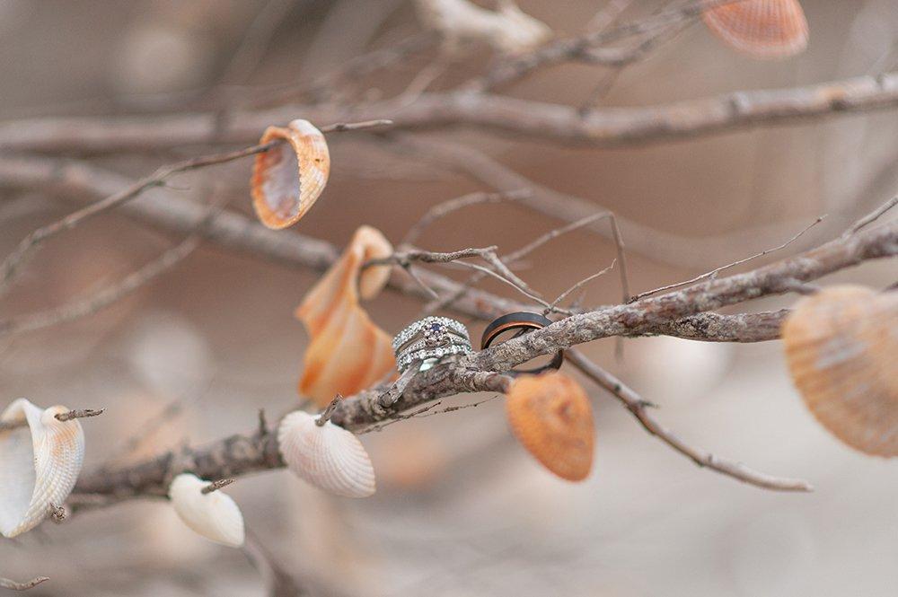rings on seashell covered tree