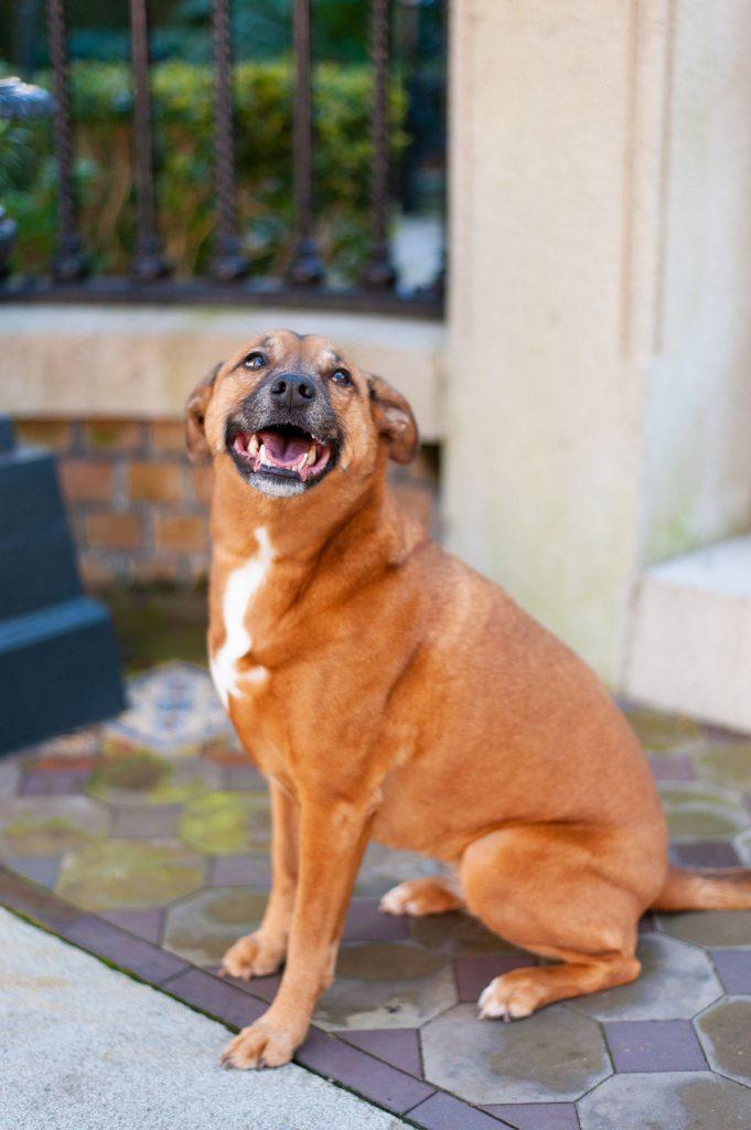 dog in downtown charleston sc