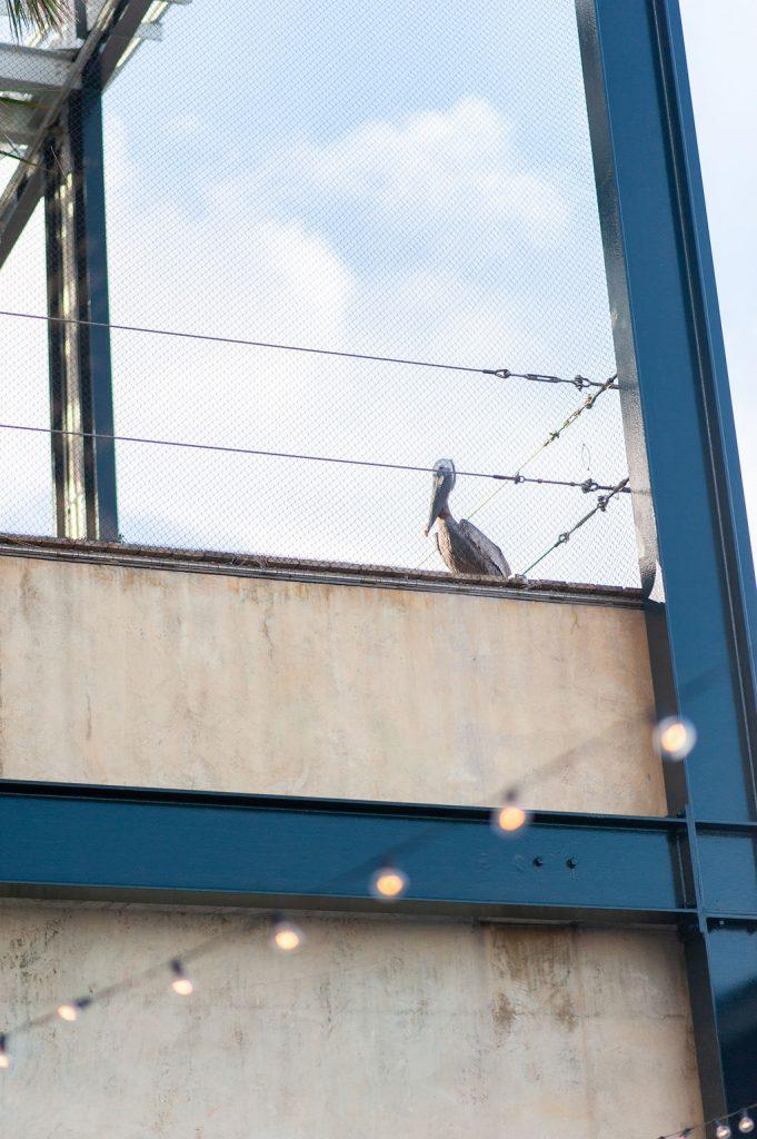 Pelican watching wedding ceremony at the South Carolina Aquarium